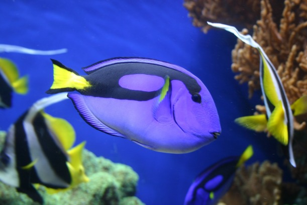 fish-1348484_1920